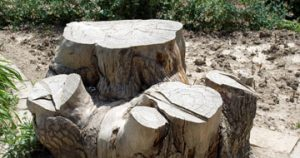 stump removal Hansonville