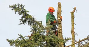 tree removal Everton Upper